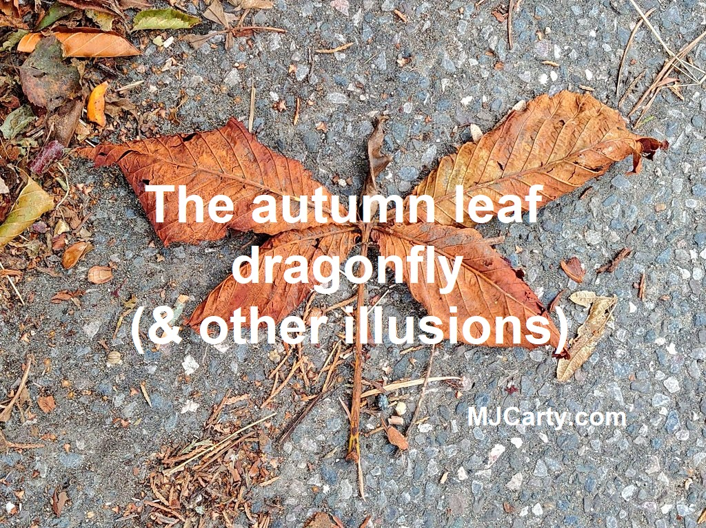 test Twitter Media - #Blogulence: The autumn leaf dragonfly (& other illusions)  HT @heatherbussing  https://t.co/0IT7S3T0oP https://t.co/hog6ARoCSi