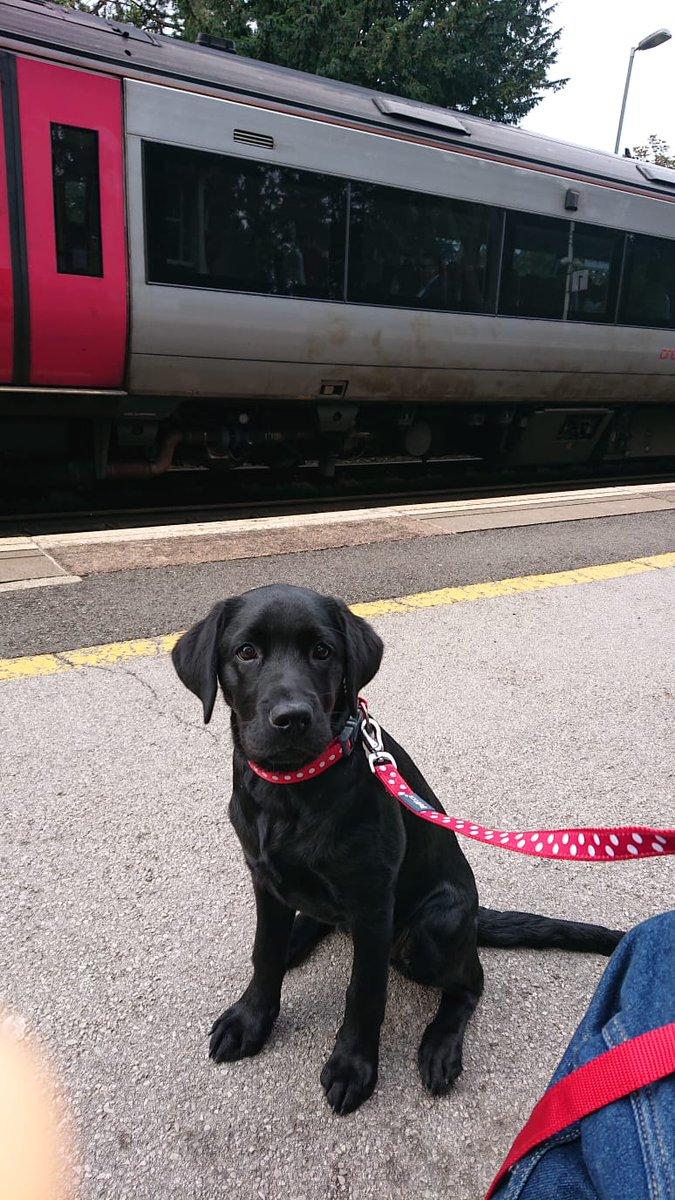 TPD Rosie continues her environmental training. This morning was a visit to the train station.