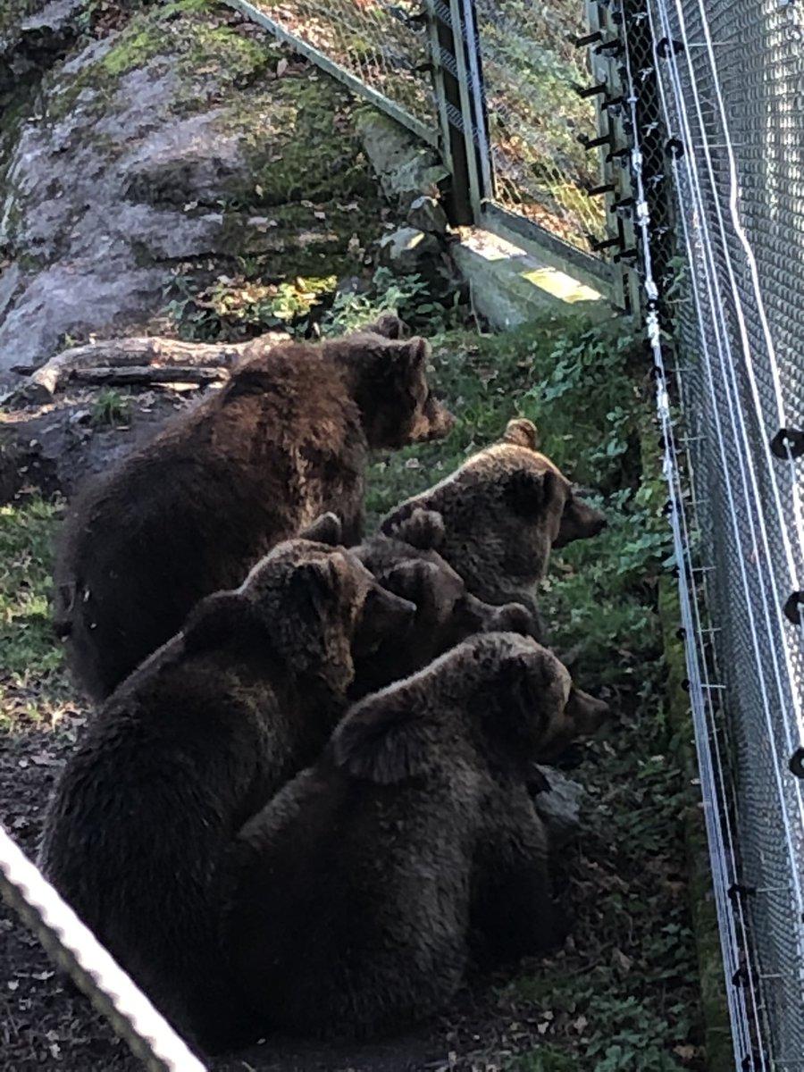 隣の檻でミーアキャットが大喧嘩を始めたので、家族総出でこわごわと様子を伺っているクマの一家