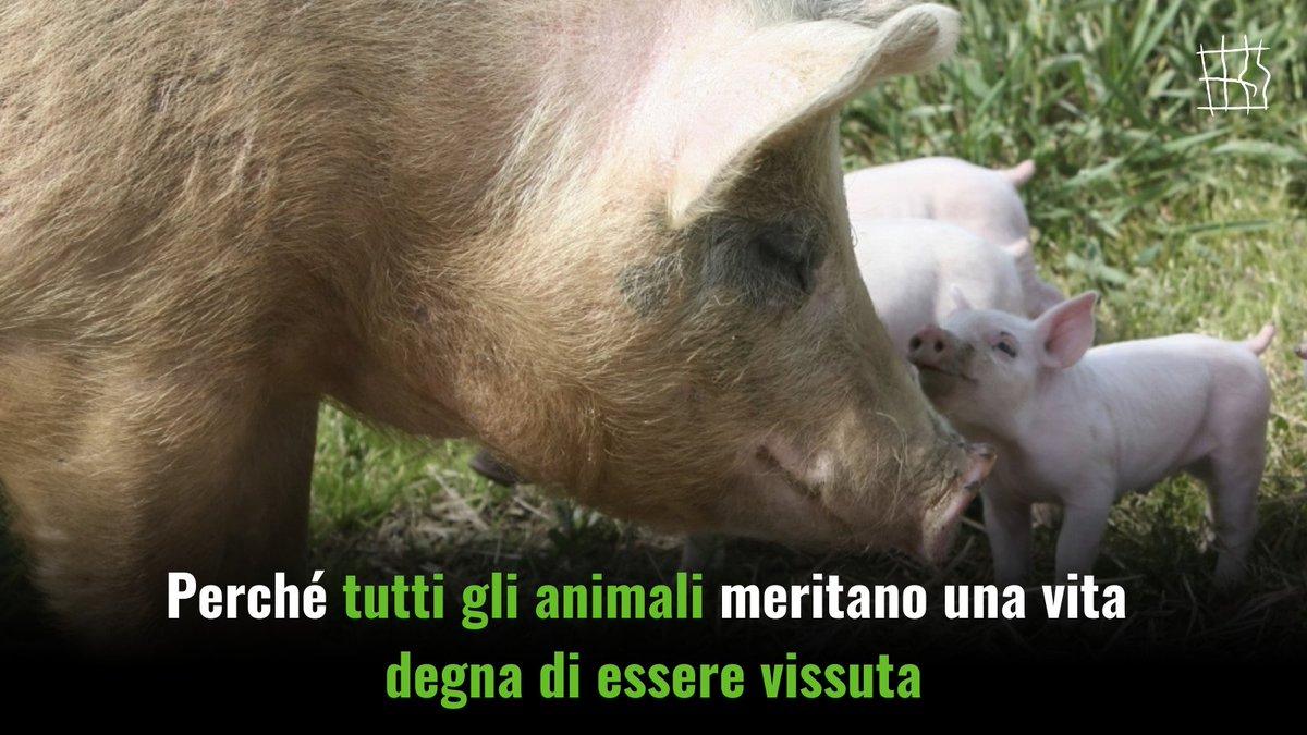 Animalistiitaly photo