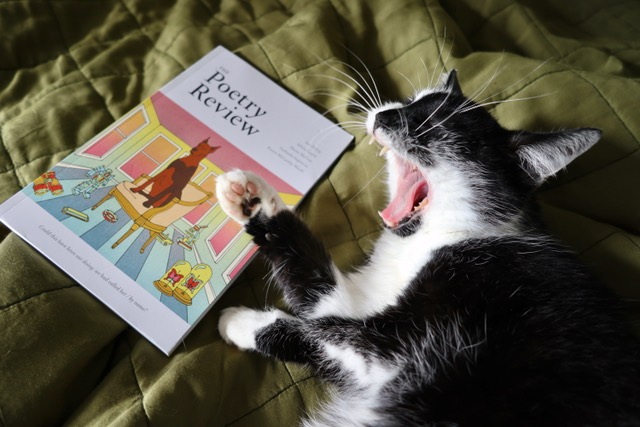 test Twitter Media - To accompany the big dog @KateDehler on the Autumn #PoetryReview poet @pollyrowena has sent in these images of her cat (who is even bigger than the dog). Join the new issue launch tonight here: https://t.co/sMznnjrQeW #PoetsAndPets https://t.co/axuusTnETy
