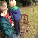Image for the Tweet beginning: Chestnut class were using different
