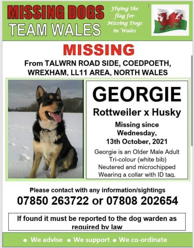 💥GEORGIE IS MISSING FROM TALWRN ROAD SIDE OF COEDPOETH, WREXHAM, LL11 AREA,, WREXHAM,, NORTH WALES SINCE WEDNESDAY 13TH OCTOBER, 2021💥 🔺MICROCHIPPED AND NEUTERED🔺 Please look out for him and if you have any sightings please ring the owners on numbers below.
