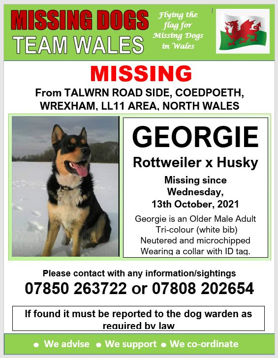 💥GEORGIE IS MISSING FROM TALWRN ROAD SIDE OF COEDPOETH, WREXHAM, LL11 AREA,, WREXHAM,, NORTH WALES SINCE WEDNESDAY 13TH OCTOBER, 2021💥MICROCHIPPED AND NEUTERED🔺 @Anthony_Bailey_ @mazzy1412 @RedWelshy @missingdogwales @CarolPoyerPeett @rosiedoc666 @veryluckypugs @RachaelB100