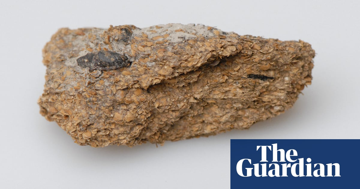 'Sophisticated': ancient faeces shows humans enjoyed beer and blue cheese 2,700 years ago