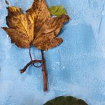 Image for the Tweet beginning: Using our Autumn trail collections