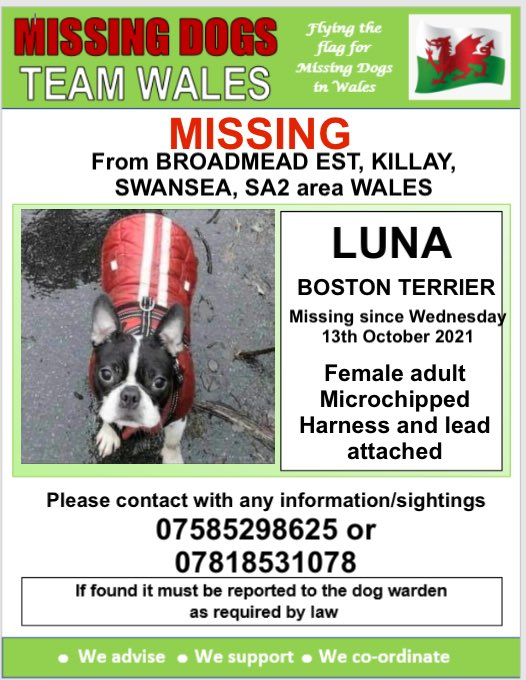 ‼️URGENT ‼️BOLTED FROM HER NEW OWNERS CAR BROADMEAD EST KILLAY SWANSEA SA2 ‼️ On Wed 13th October 💥💥 LUNA DOES NOT KNOW THIS AREA AT ALL AND HAS A HARNESS & LEAD ATTACHED ‼️ IF SEEN DO NOT CHASE JUST PLEASE CALL ONE OF THE NUMBERS ON THIS POSTER ⬇️⬇️ #Missingdogsteamwales