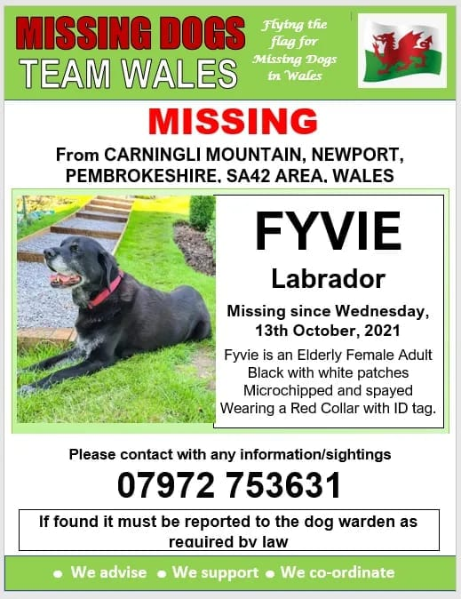 #Fyvi missing 13/10/2021 #CARNINGLI_MOUNTAIN #NEWPORT #PEMBROKESHIRE #SA42 AREA #WALES WEARING RED COLLAR WITH ID TAG. #CHIPPED #SPAYED @Anthony_Bailey_ @mazzy1412 @RedWelshy @CarolPoyerPeett @rosiedoc666 @RachaelB100 @veryluckypugs @KarenFi51820768 @missingdogwales @bs2510