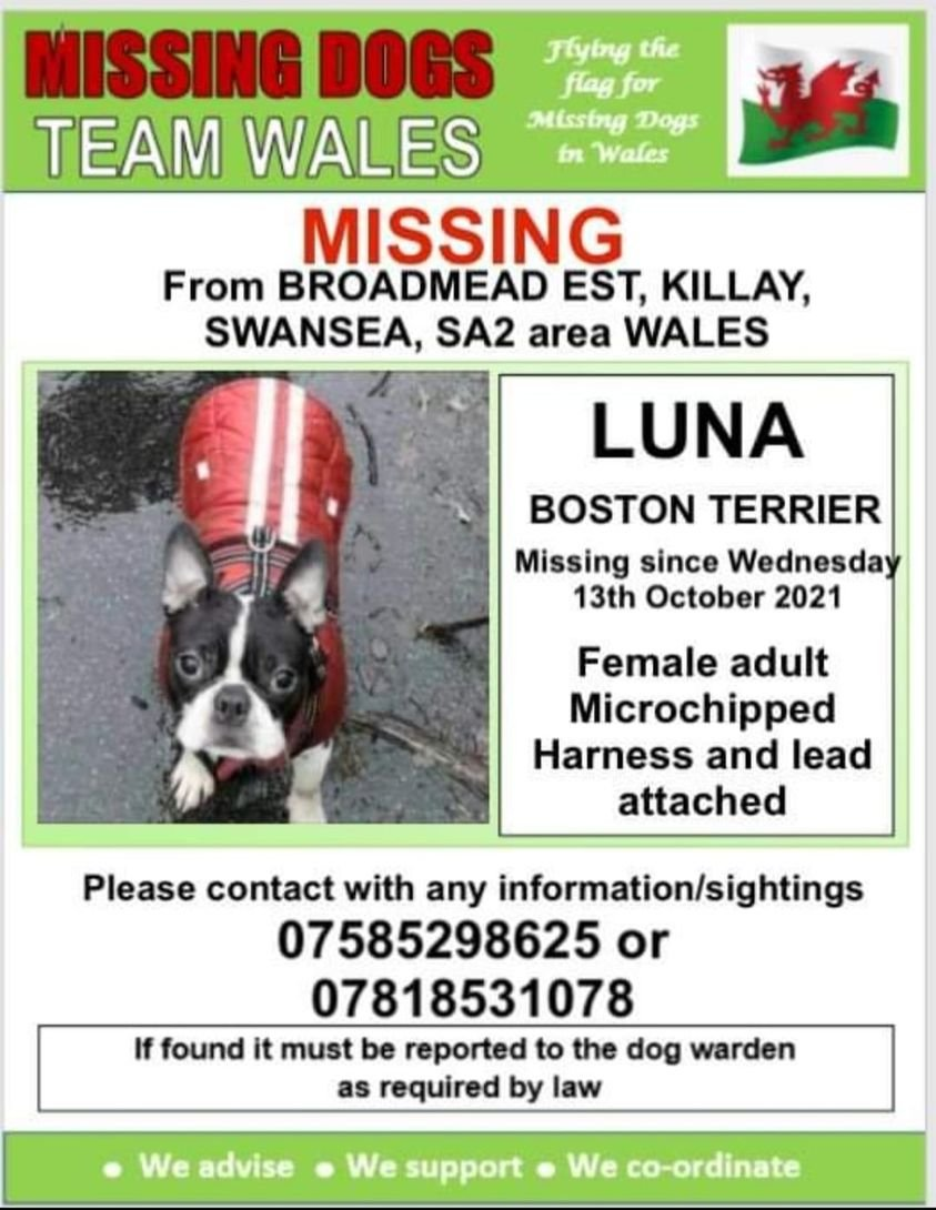‼️URGENT ‼️BOLTED FROM HER NEW OWNERS CAR BROADMEAD EST SWANSEA SA2 ‼️ On Wed 13th October 💥 LUNA DOES NOT KNOW THIS AREA AT ALL AND HAS A HARNESS & LEAD ATTACHED ‼️ @Anthony_Bailey_ @mazzy1412 @missingdogwales @CarolPoyerPeett @juliagarland73 @rosiedoc666 @RachaelB100