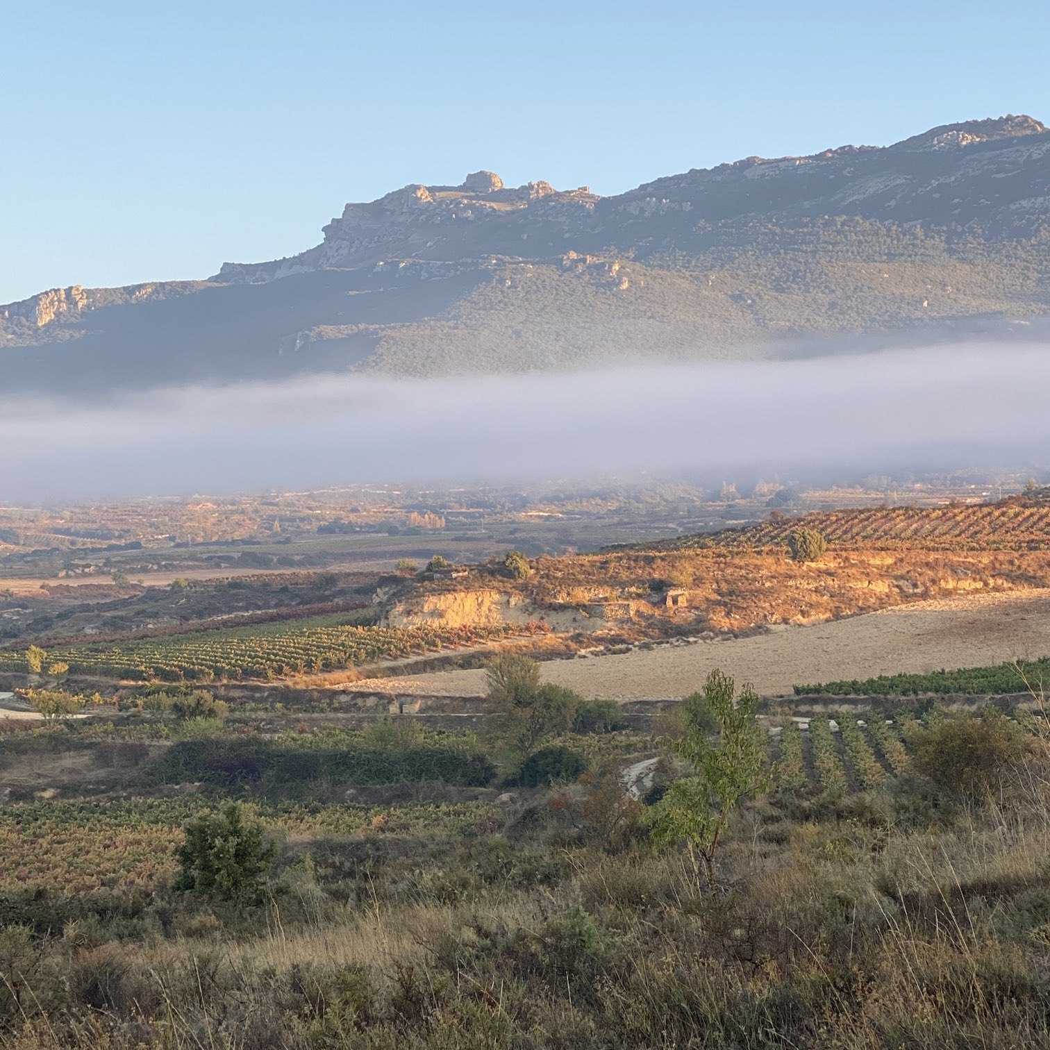 I'm going to miss these morning vineyard visits. #sanvicente #rioja https://t.co/1HzRfVgGoi