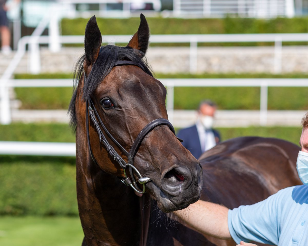 After a superb run over C&D earlier this month, we have declared VENTURA DIAMOND for the Group 1 Champions Sprint on British Champions Day at @Ascot! 💎  It's an absolute dream to have a filly that can compete at this level, and we wish her owners the very best of luck! #TeamMPR