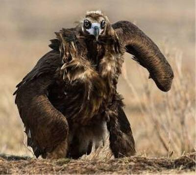 【画像】フクロウが地面を走る瞬間が衝撃すぎるwwww