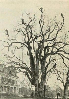 Tree trimmers, back in the day.