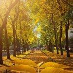 Image for the Tweet beginning: Sun + Autumn colors =
