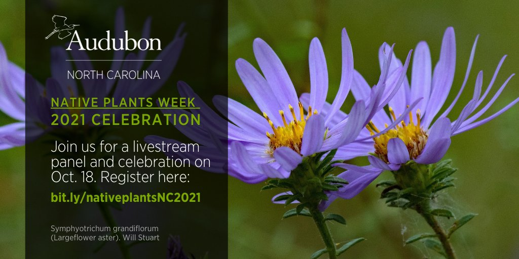 Today at noon! #NativePlantsWeek