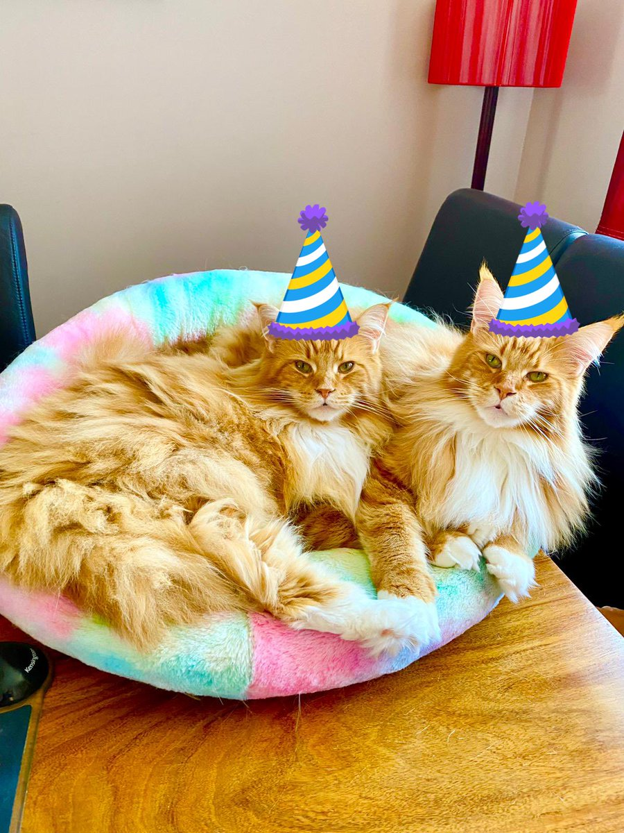 Happy birthday @DonnaLeeThomps8 and @azazellothecat - have a wonderful day both of you! See you at the party later! 🥳🥳🧡🧡🦁🦁 #teamfloof #CatsOfTwitter