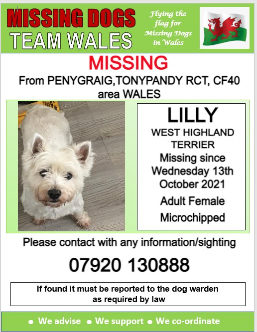 🔺 LILLY🔺 MISSING FROM PENYGRAIG, TONYPANDY, RCT, CF40 area WALES. ❗ MISSING SINCE WEDNESDAY 13th OCTOBER 2021. ❗❗ LAST SEEN NEAR PINE TREE CAR SALES TONYPANDY, PLEASE WATCH OUT FOR LILLY AND CALL NUMBER WITH ANY SIGHTINGS. @Anthony_Bailey_ @mazzy1412 @CarolPoyerPeett