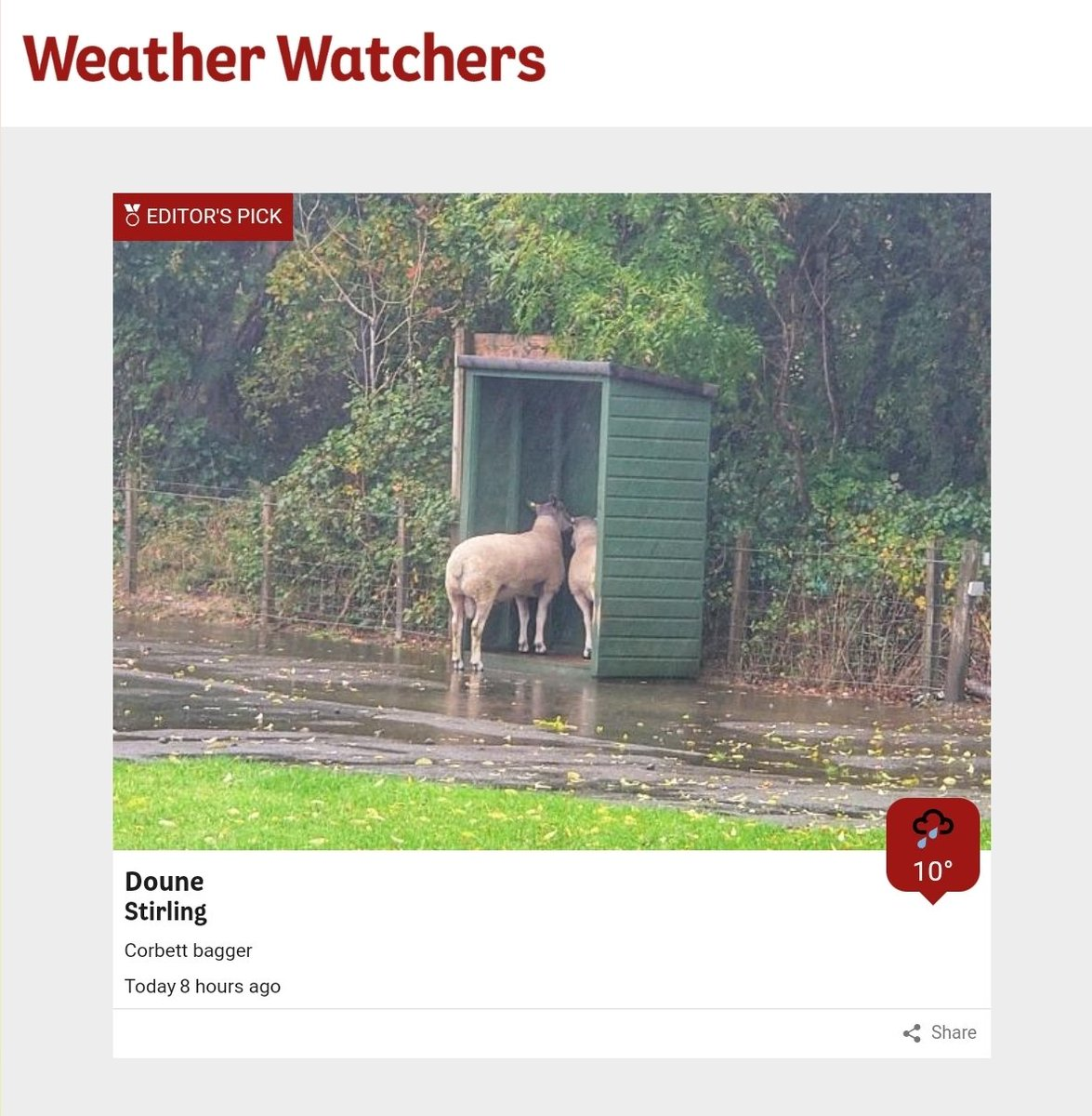 Got to be one of the best Weather Watcher photos I've seen for some time! 😂😂 #GoodNightTwitterWorld @bbcweather #Scotland #MondayFunday 🐑🐑🐑