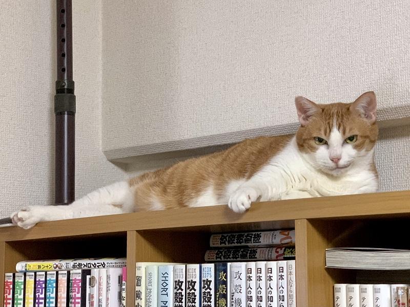これは絶対つよいやつ猫「計画通り……(ニヤリ)」 ニヒルな笑みを浮かべる猫ちゃんに強キャラ感があふれ出ている