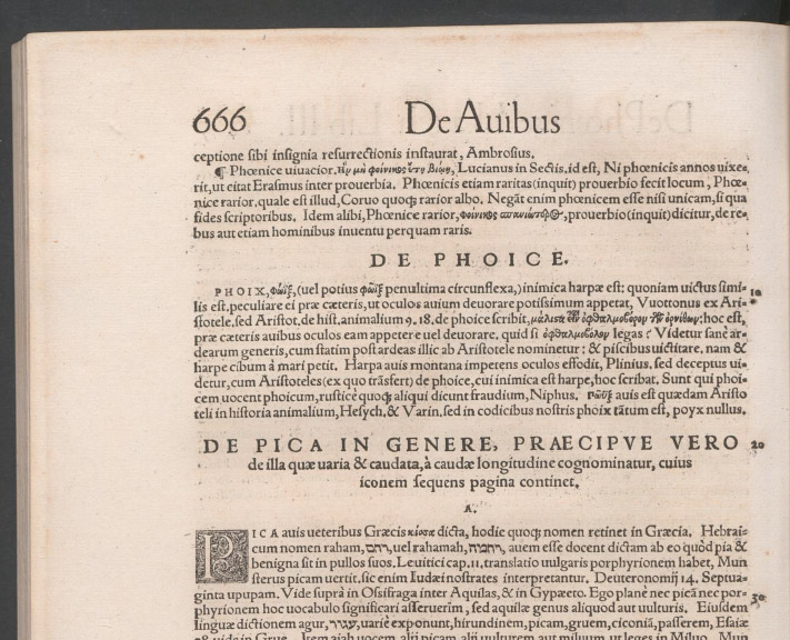 The feeling when you see the page number for Gessner's entry for the most splendid goth bird of all in his Historia Animalia Liber III (1555)👻💀🤘🎃🕷️🕸️