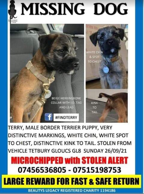 💥💥💥SUSPECTED STOLEN BUT MAY GET DUMPED, TERRY HAS A CRIME NUMBER AND ALL LEADS ARE BEING GIVEN TO GLOUCESTERSHIRE POLICE. ALSO SEARCHING ON GROUND WITH TRAIL CAMS AND THERMAL SCOPE IS CONTINUING. 💥 IF YOU HAVE SEEN TERRY RUNNING LOOSE IN AREA OF KINGSCOTE, GL8 ,PLEASE CALL