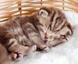 @SusanHu46303185 Good night Susan have a peaceful night my dear friend hugs see you tomorrow 😊❤️