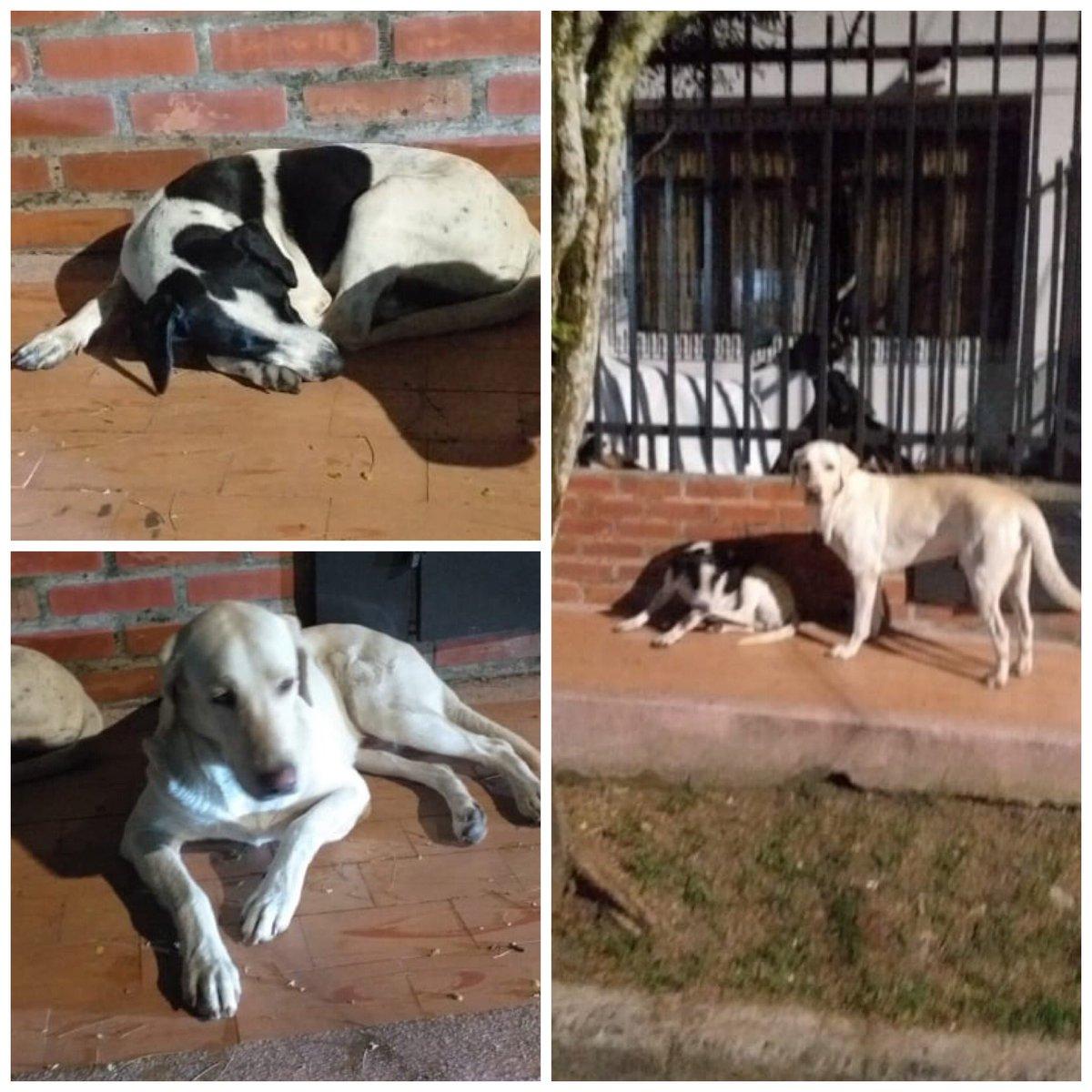 #ReporteEntérateCali Estos dos perritos al parecer se encuentran perdidos en el barrio olimpico en la cra 35. Si alguien los reconoce de inmediato pasen por el sector.