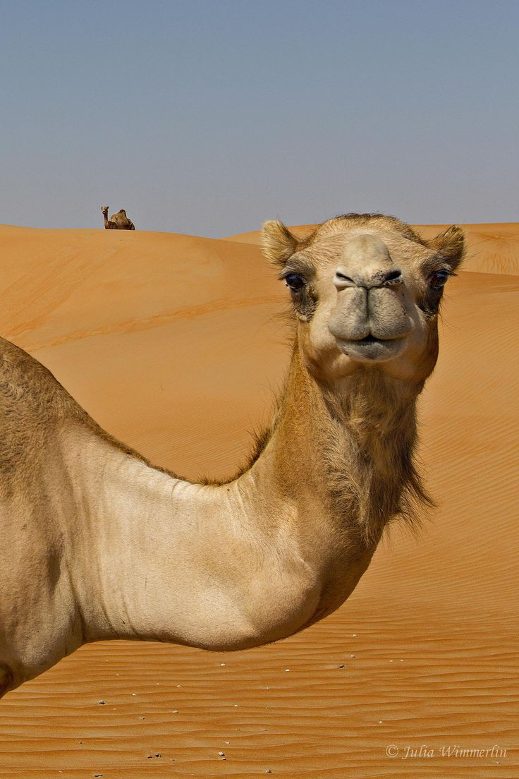 Happy hump day. 💙🤎🐪💙🤎 Enjoy your Wednesday.