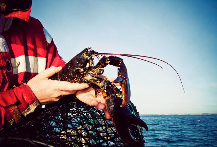 Har du förlorat en tina under höstens #hummerfiske? I GhostGuard kan du skriva in redskapets koordinater och se var förlorade fiskeredskap har hittats. Det underlättar vid städinsatser som draggning. #spöknät https://t.co/vfGZyswA2E https://t.co/pCyxk9qejT