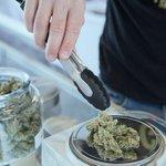Image for the Tweet beginning: #cannabiscommunity #marijuana #cannabis B.C. cannabis