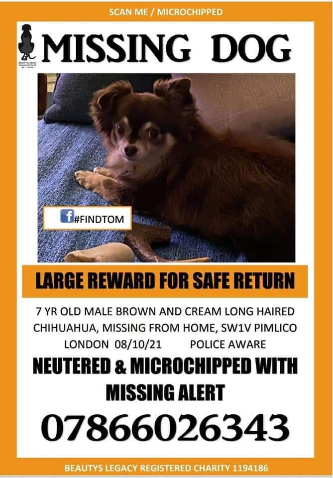 🐕 BEYOND URGENT‼️ Little TOM & his mum need an army. TOM'S mum is disabled - Tom is a 7yr old long haired #chihuahua, #missing from home #Pimlico #London #SW1V on 8 October Very likely he has been picked up😔 NEUTERED so NO GOOD FOR BREEDING MICROCHIPPED facebook.com/groups/2276613…