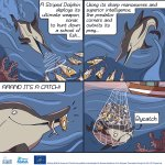 Image for the Tweet beginning: 📢 #MedBycatch project's  cartoon