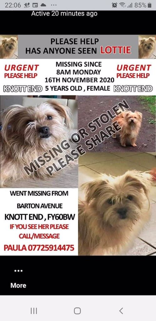 On 16th Nov my little lottie has been missing a whole year 😪 where could she be. I've followed up so many dogs that look like her, I've lost count, the most recent found in Hampshire. I won't give up on lottie and now I don't think I'm ever going to get her back 😪😪