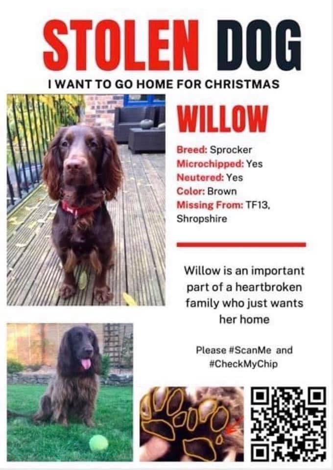 #SpanielHour WILLOW Whoever has WILLOW can we ask you to think what you're doing…we understand you've fallen for her You will of grown to love her It will seem she feels the same for you SHE WONT…she will be pining 💔for her family silently BECAUSE….she can't talk 😪