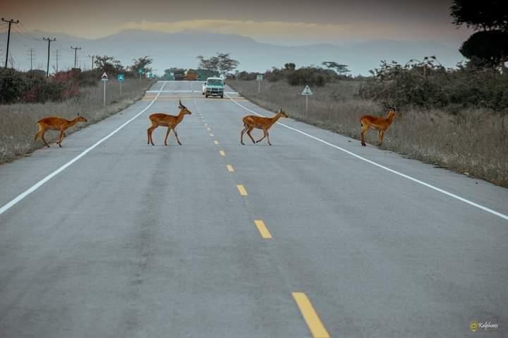 Magnificent Uganda the Pearl of Africa. Where is this? @ugwildlife @Ugandawildlife #visituganda #wildlife 📷Courtesy
