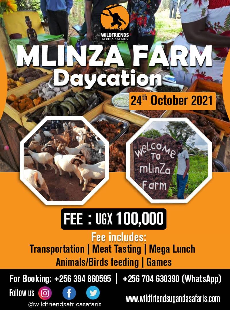 Looking for plot this weekend? Join this #Daycation for some serious excessive nyama choma at Mlinza farm😊 #Travel #VisitUganda #foodfiesta