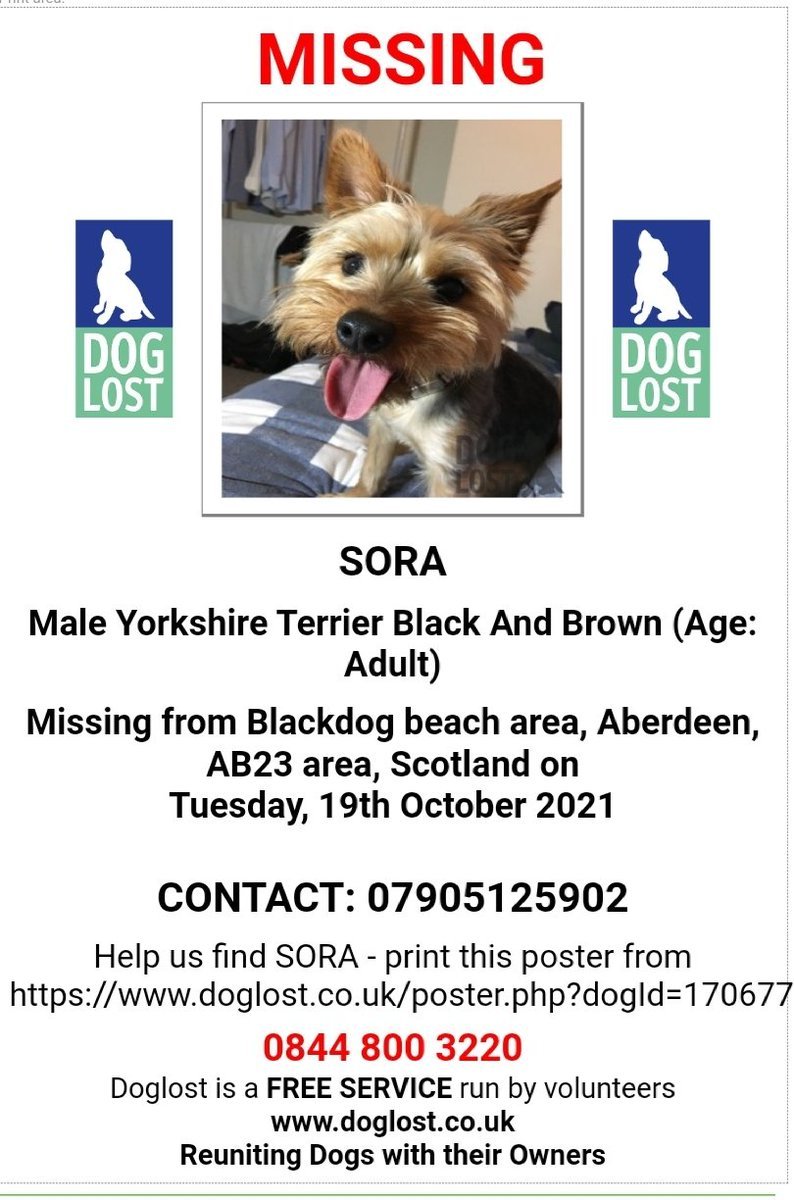 🐕 Urgent! SORA went #missing at 3.30pm at the Blackdog beach by the shooting range #Aberdeen #AB23 on 19 October. Can anyone out near Blackdog keep an eye out for this wee fella. He could have panicked & gone to ground. Please contact if sighted 🤞doglost.co.uk/dog-blog.php?d…