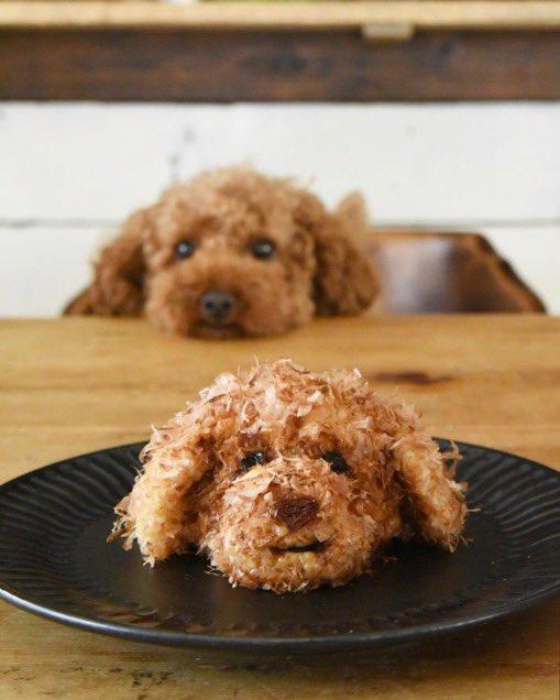 母親が作ったトイプードルおにぎりに犬も驚くレベル✨✨