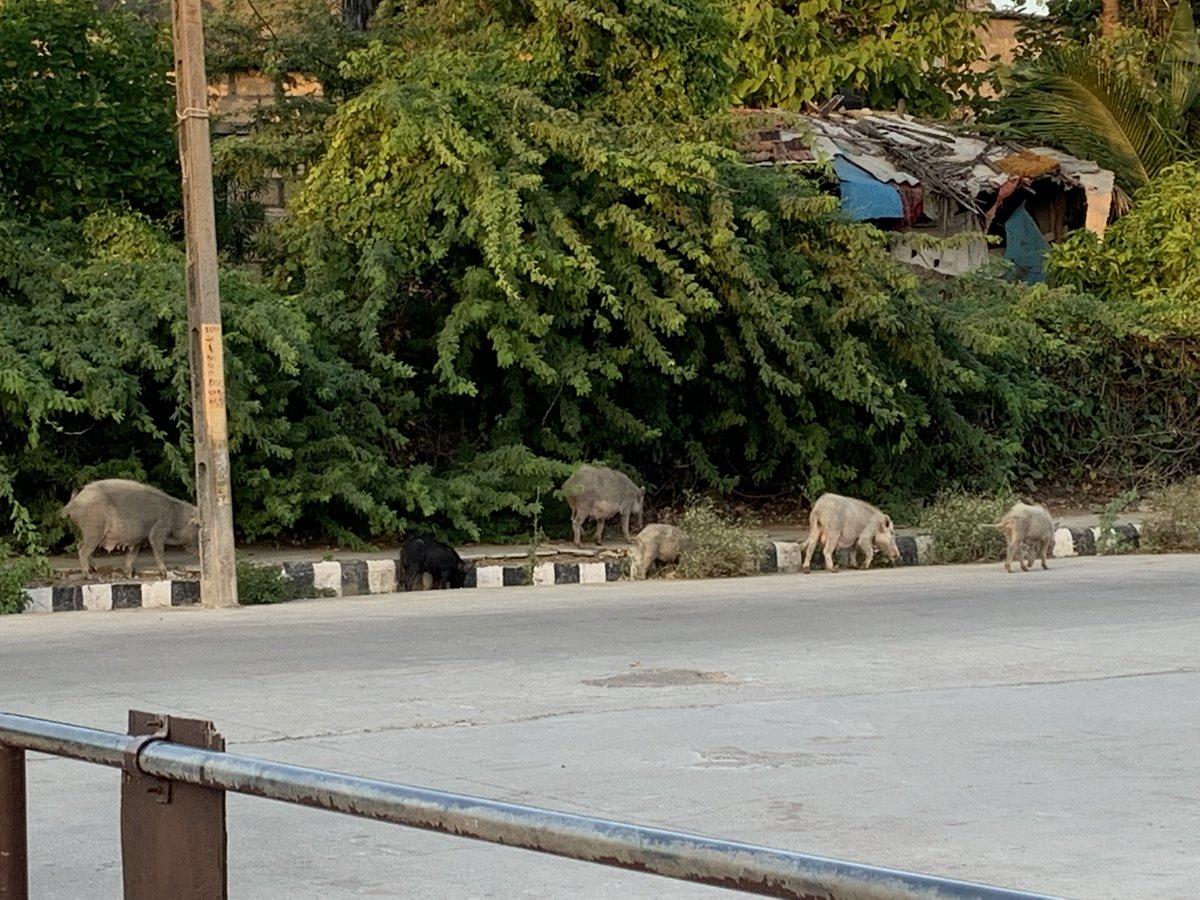 Currently in Somnath, little Ghaznis 🤲🏻
