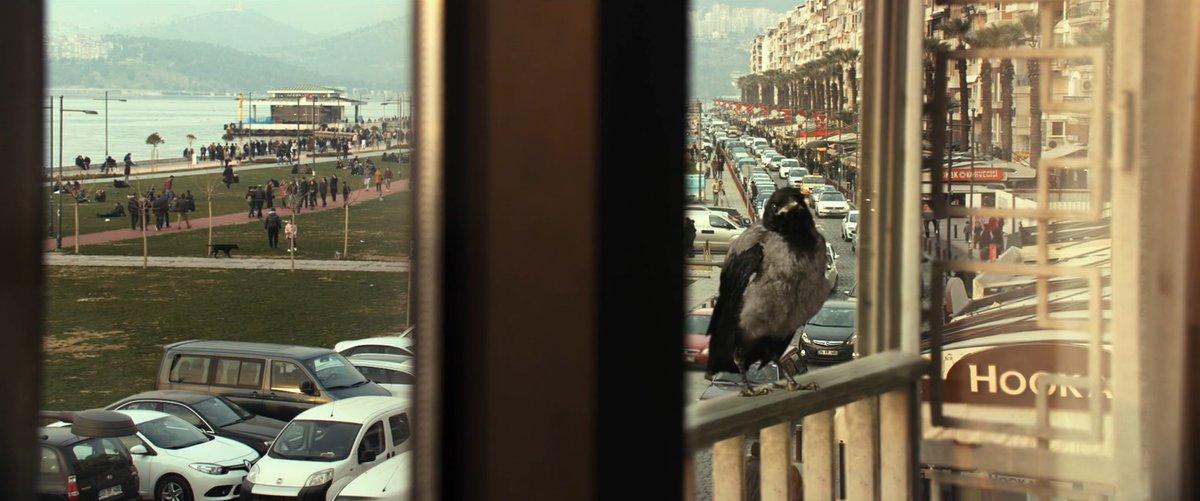 #İşeYararBirŞey'in kargaları… #tbt 🕯 Sanat yönetmeni: Elif Taşçıoğlu Karga illüstrasyonu: Furkan Nuka Birgün  #somethinguseful #karga #crow #eliftascioglu #elifoner @FurkanNuka #pelinesmer #barisbicakci #dildemahalli #throwbackthursday