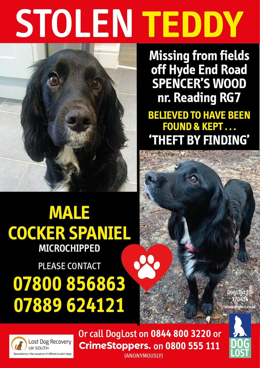 TEDDY NOW LISTED AS STOLEN Since he went missing on October 11th there have been no confirmed sightings - he is a nervous boy who will be missing home - have you seen him with anyone?? SPREAD THE WORD - PLEASE SHARE EVERYWHERE!! His family are desperate for news - PLEASE CALL