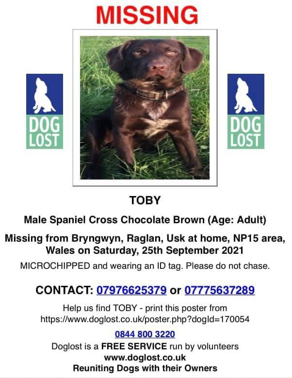 MISSING TOBY from WALES 25/9/21 😒 HAVE YOU SEEN HIM ?🙏