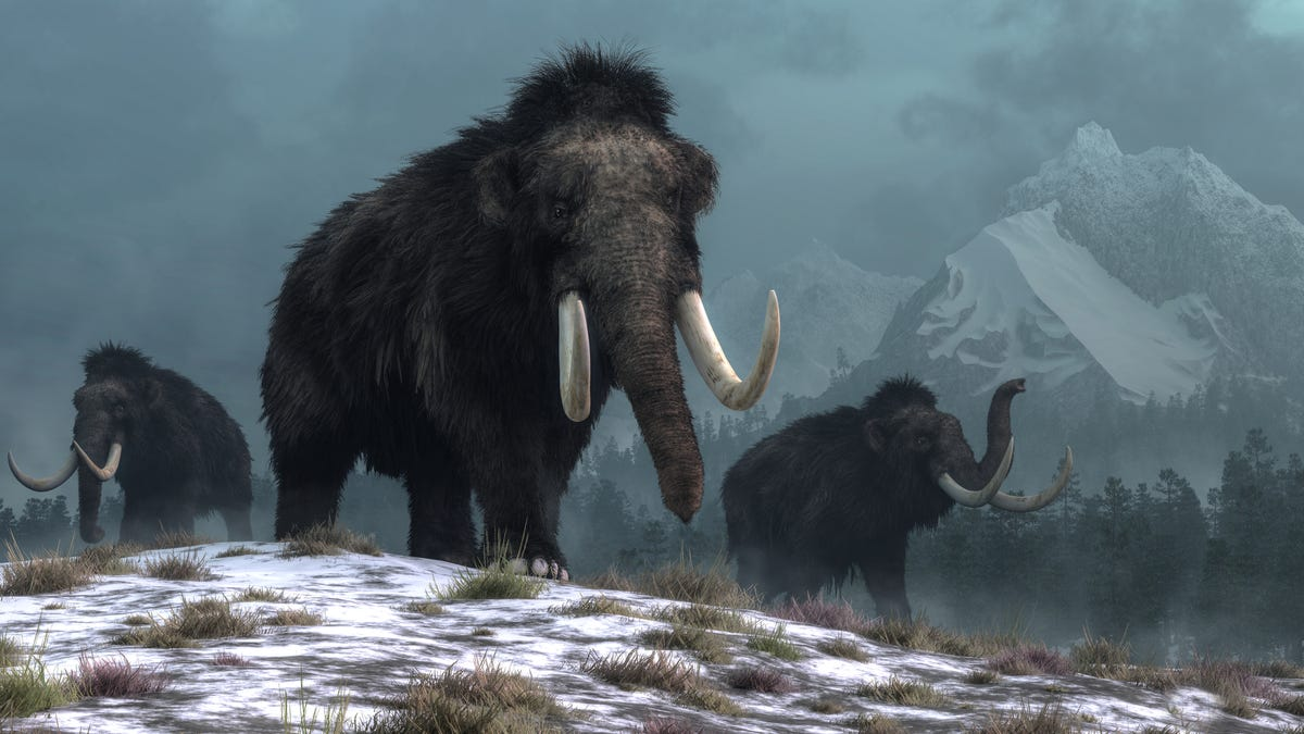 RT @Gizmodo: Climate Change Wiped Out the Mammoth, New DNA Study Shows