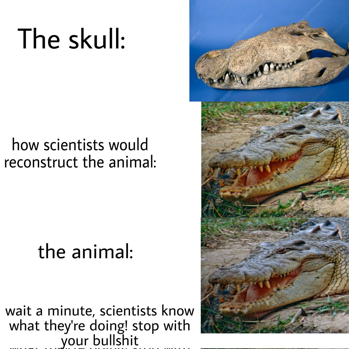 """Tired of seeing this anti paleontology """"hOw ScIeNtIsTs WoUlD rEcOnStRuCt iT"""" bullshit so I made this"""