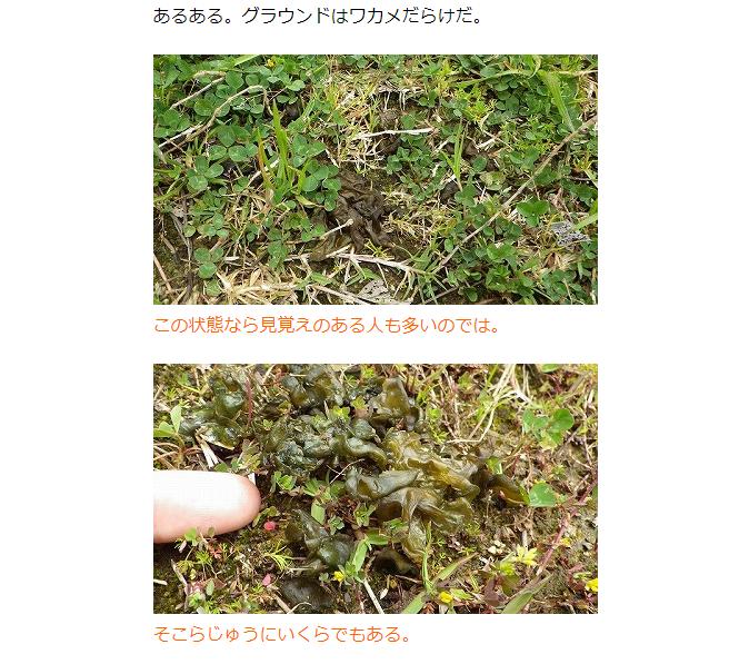 子供の頃よく遊んだ近所の公園やグラウンドには、なぜかよくワカメが落ちていてみんなで「公園ワカメ」と呼んでいた。調べてみるとあれは藍藻という藻類の一種で「イシクラゲ」という名前だそうだ。なんと、食べられるらしい。