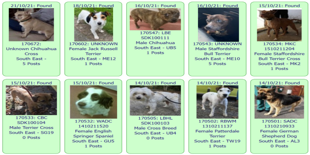 #FOUND #DOGS * SOUTH EAST * October 21st ~ October 14th 2021 These #FoundDogs are on the @DogLostUK site as being FOUND in our #SouthEast Area If you see your dog below go to doglost.co.uk & put the ID NUMBER (shown under photo) into the search menu for more details
