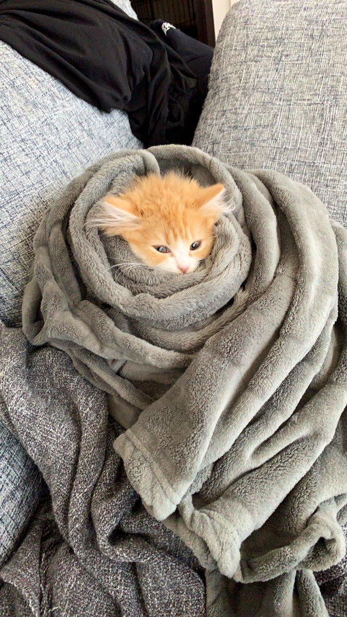 初めてのお風呂後、湯冷めしないようにブリーダーさんに教わった方法で暖めています。