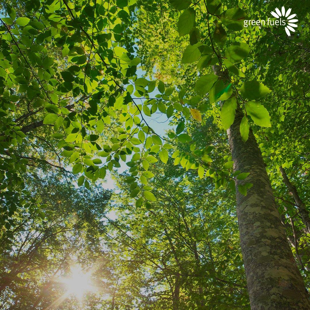 greenfuelsltd photo
