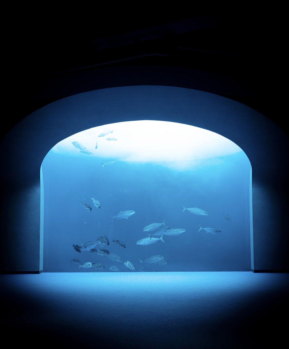 四国水族館の美しさを届けたい。