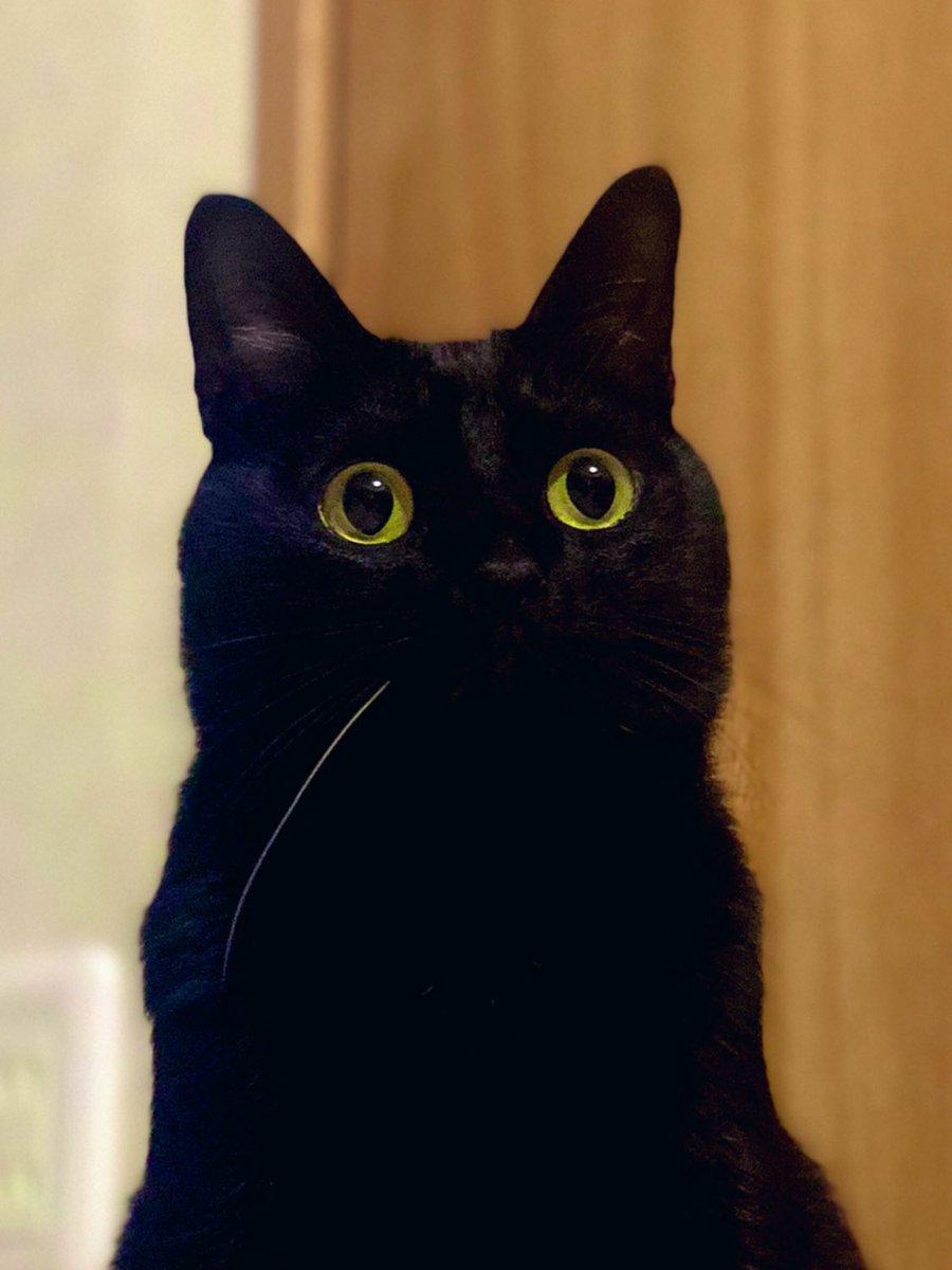 黒猫のこの無表情な感じが好き